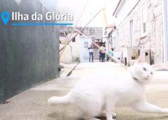 ▶️Vídeo: Ilhas de turistas e de portuenses